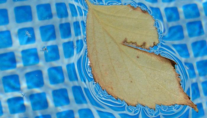 Cómo Mantener la Piscina Limpia sin Depuradora
